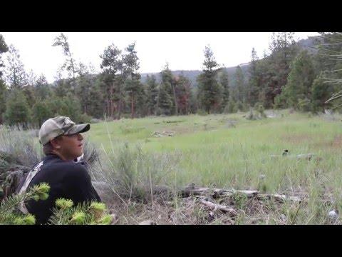 Что бы вы сделали, услышав такие звуки в лесу?
