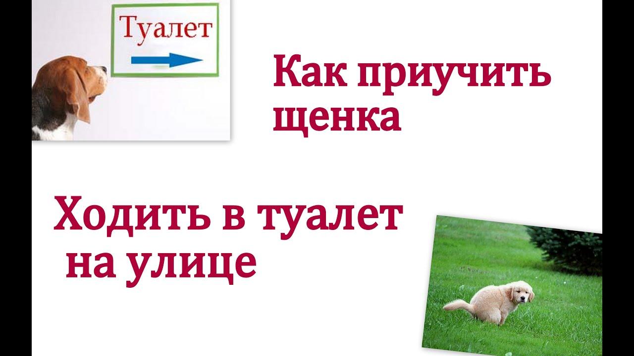 Смотреть онлайн: Как приучить щенка ходить в туалет на улицу?