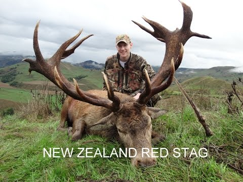 Red Stag Hunting New Zealand with Amplehunting