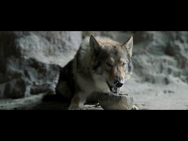 Anteprima Immagine Trailer Alpha - Un'amicizia forte come la vita, nuovo trailer ufficiale italiano