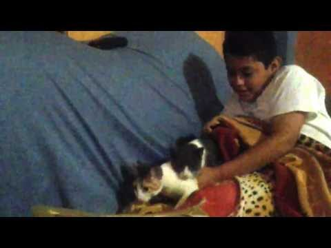 Video gatos sex download in MP3, 3GP, MP4, WEBM, AVI, FLV January 2017
