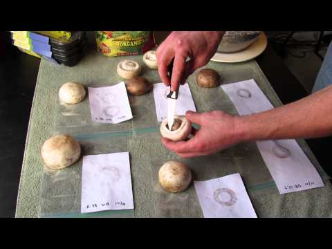 An Experiment: Growing Mushrooms - Collect Spores with Mushroom Spore Prints 1 of 6 TRG 2015