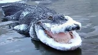 Video 13 SHOCKING ANIMALS THAT WERE FROZEN IN ICE! MP3, 3GP, MP4, WEBM, AVI, FLV Juni 2019