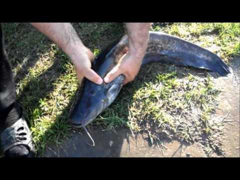Зарыбление и отчёт о рыбалке от 09.05.2013г