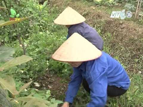 VTC 16_Bà chủ trang trại Đà điểu triệu đô ở Hải Dương