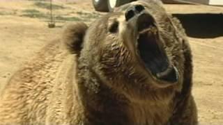 Video 911: Deadly Bear Attack MP3, 3GP, MP4, WEBM, AVI, FLV Mei 2017