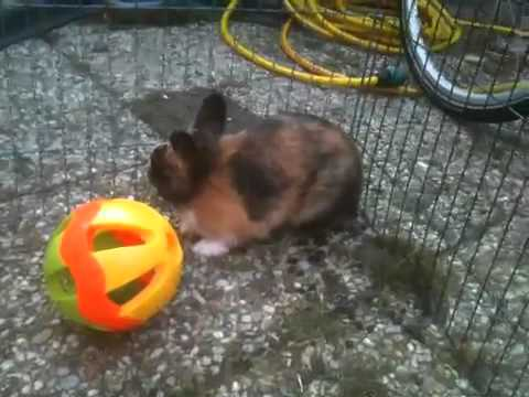 schattige konijnen