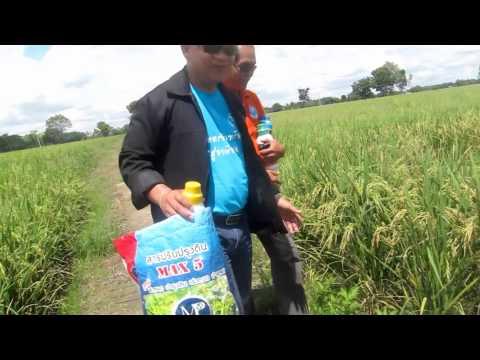 เอ็มพีเกษตรอินทรีย์ไร้สารพิษ กับข้าว คุณสมพงษ์
