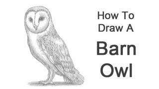Видео: как нарисовать сову