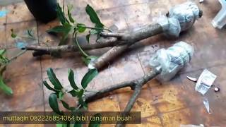 Video Cari bahan bonsai mangga ...BONSAI MANGO MP3, 3GP, MP4, WEBM, AVI, FLV Februari 2018