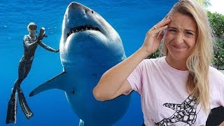 Video Should Ocean Ramsey have touched the Great White Shark? MP3, 3GP, MP4, WEBM, AVI, FLV Juni 2019