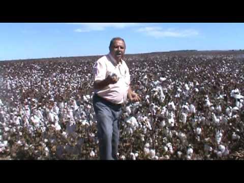 CBDF colheita em Divinopolis de Goiás.mpg