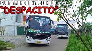 Video UNIK!!! Bus Ini Jika Mundur Memiliki Suara Yang Unik : Kejar Bus Dian Trans aka Zabaleta & Elventuro MP3, 3GP, MP4, WEBM, AVI, FLV Juni 2018
