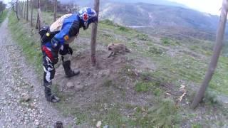 animale salveaza o vulpe