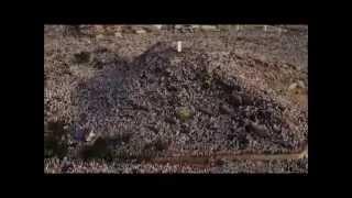 Surah Al Fajr  - Hani Ar Rifai - Indonesia Translate