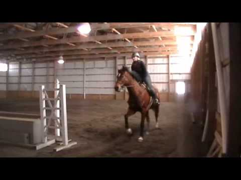 Sparky schooling 2