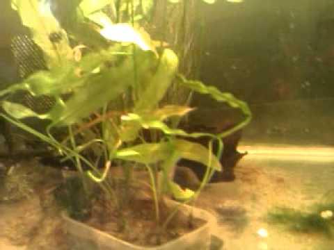 Shrimp Tank Part: 3