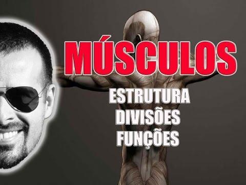 muscular - MEU SITE: http://www.anatomiafacil.com.br FACEBOOK: http://www.facebook.com/anatomiafacilcomrogeriogozzi TWITTER: http://twitter.com/RogerioGozzi Primeira au...