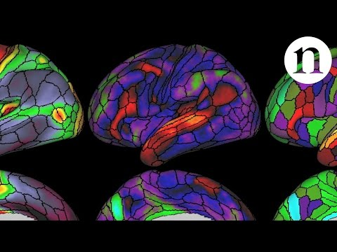 Map of brain areas