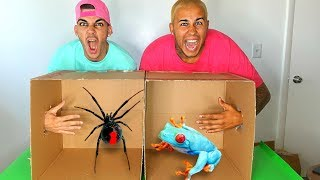 Video What's In The BOX Challenge!!! (LIVE ANIMALS GONE WRONG) MP3, 3GP, MP4, WEBM, AVI, FLV Juni 2017