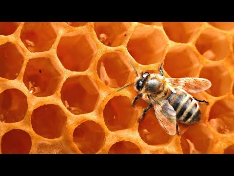 EVERYTHING you have EVER WANTED to KNOW about HONEYBEES w/ Reese Halter