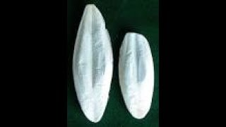 Benefits of cuttelbone for bird's