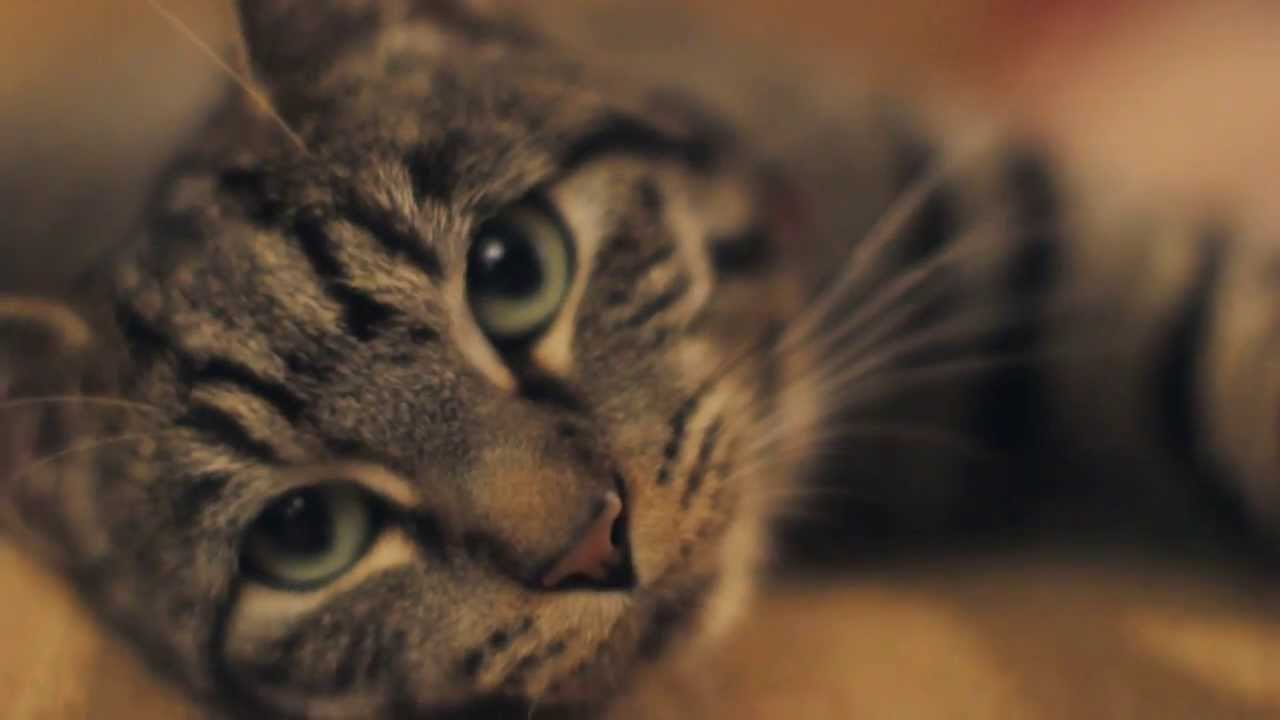 A Cat's Guide To Taking Care Of Your Human