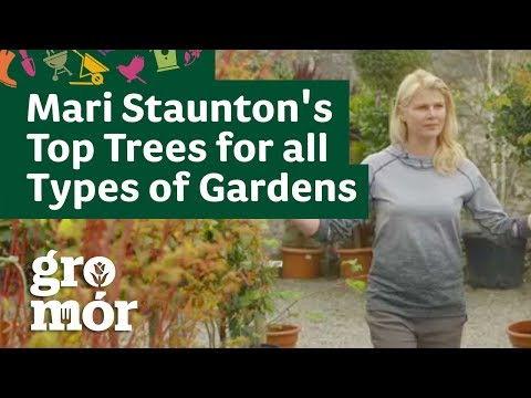 Mari Staunton's Top Trees for all Types of Gardens