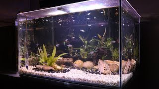 Video Natural Aquascaped Aquarium *Step by Step TIMELAPSE* | TonyTanks MP3, 3GP, MP4, WEBM, AVI, FLV Oktober 2018