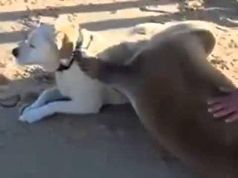 foca affettuosa abbraccia un cane