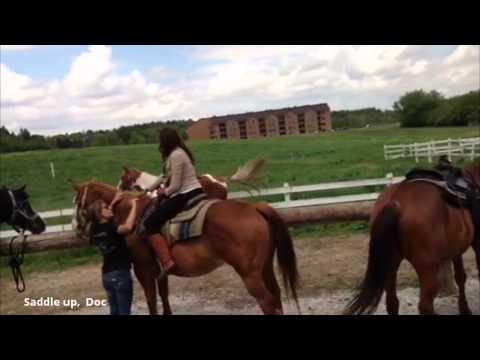 Equine Love: Horseback Riding