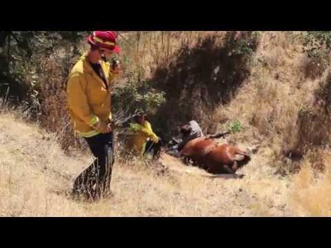 Horse and rider slip off trail  into ravine. Deer Park, Fairfax CA