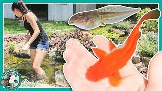 Fish Pond or Frog Pond? // POND UPDATES by Solid Gold Aquatics