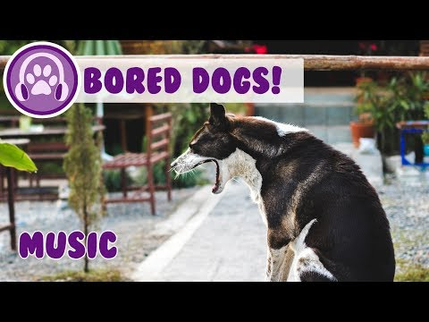 Music for Bored Dogs! Music to Entertain Your Bored Dog and Keep them Happy!