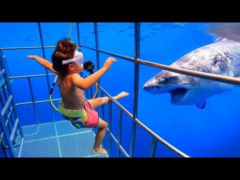 L'enfant est tombé dans la cage à requin et...