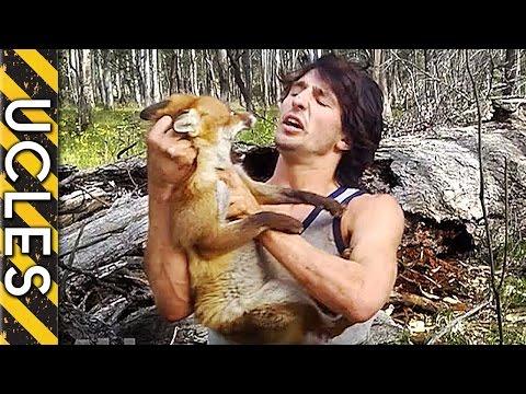 как ловить лис