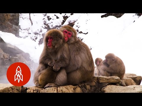 Japan s AllNatural Monkey Spa