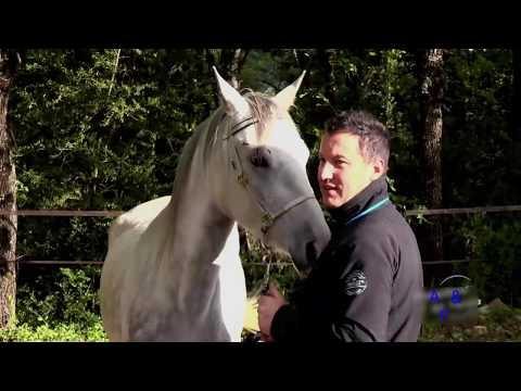 Video animal mating. horse natural mating download in MP3, 3GP, MP4, WEBM, AVI, FLV January 2017