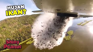 Video Mengapa Pesawat Ini Membuang Ikan Hidup Ke Danau Pegunungan MP3, 3GP, MP4, WEBM, AVI, FLV Juni 2019