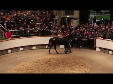 Tattersalls December Breeding Stock Sale 2012 Day 3