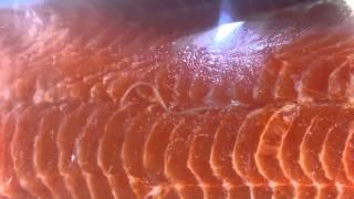 SZOK: Tasiemiec pełzał po łososiu w supermarkecie. Wideo tylko dla osób o mocnych nerwach!