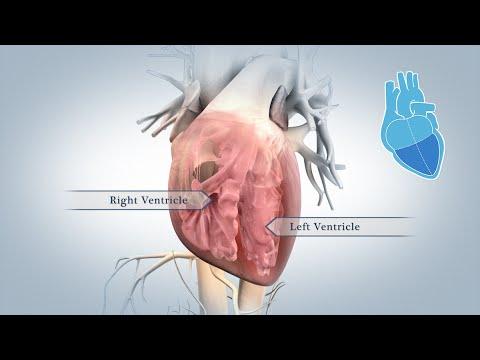 anatomia del cuore in 3d full hd: un filmato spettacolare!