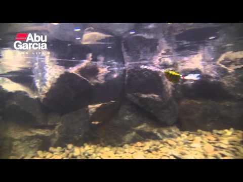 ABU Garcia Active Spinner 12g videó