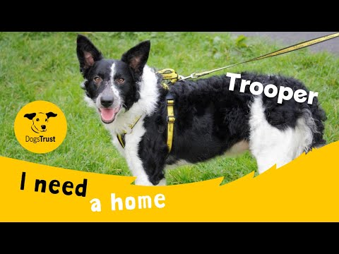 Trooper the terrific Border Collie | Dogs Trust Bridgend