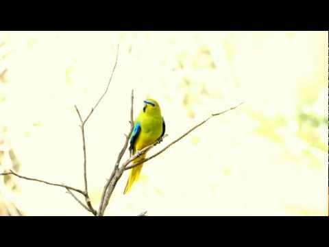 Elegant Parrot 1