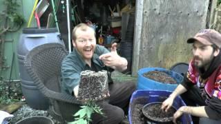 Transplanting Feeding Flowering by John Berfelo