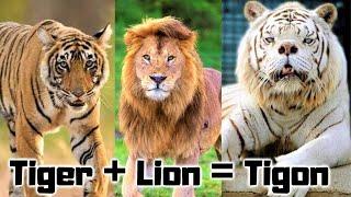 Video 15 New Hybrid Animals Created Recently MP3, 3GP, MP4, WEBM, AVI, FLV Agustus 2019