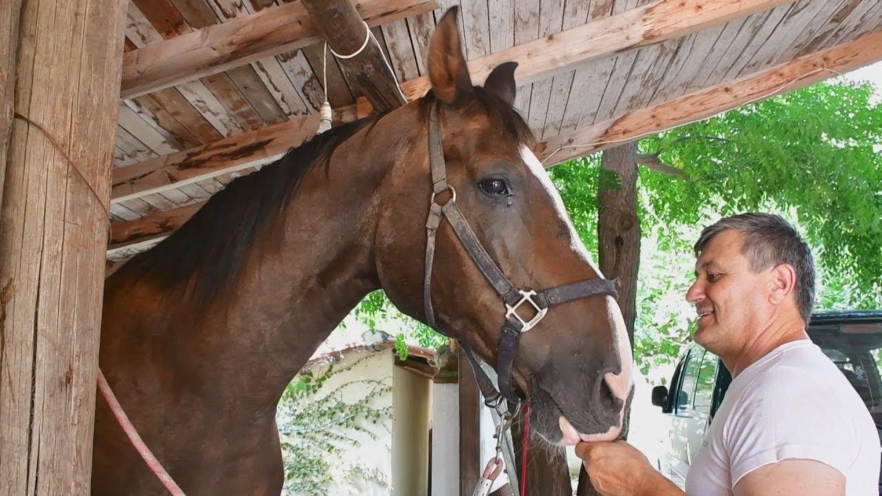Παραδοσιακό πετάλωμα αλόγου