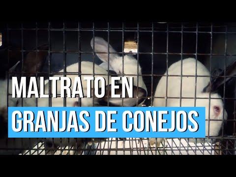 Nuova investigazione negli allevamenti di conigli porta alla luce l'agghiacciante realtà