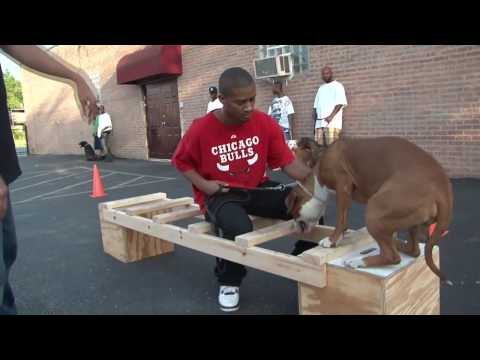 Meet the Pitbull Training Team